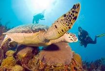 Diving in #Roatan
