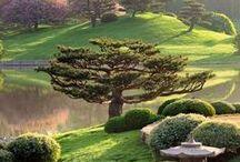 God's Beautiful World/Nature