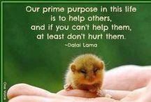 Human and Animal Rights