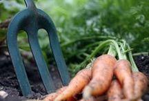 Organic Gardening / Organic Gardening, GMO Foods, and Farmers Markets