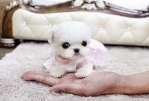 Animals / Sweetheart ; pretty ; cute ; samall animals !!!