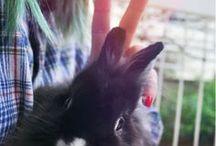 lovely bunny / bunny