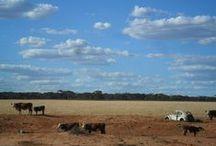 South Australia, Australia / February 2013