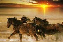 CABALLOS / Solo una forma de mostrar la majestuosidad, gallardía y belleza de estos animales.