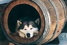 Hundetruhe Selbermachen Ideenboard / DAS Ideenboard rund um unseren Blogartikel 'Sideboard und Hundehütte 2in1 Selbermachen'. Hier gibts ähnliche und total coole andere Ideen zum Selbermachen für Hunderückzugsorte!