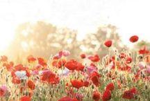 Love Builds A Garden / by Eden Isabella