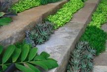 Drought tolerant planting / Plants that will tolerate of thrive in dry conditions.