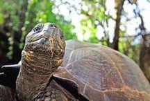 Ecuador & the Galápagos / Where we can take you