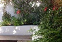 Courtyard Garden by Iron Butterfly Design / Garden designed by Iron Butterfly Designs