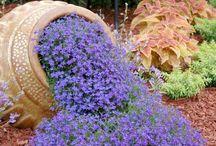 Gardening ideas / by Susan Schmidt