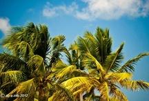 Meine persöhnlichen Karibik Favoriten / Hier sind meine 12 ganz persöhnlichen Lieblingsfotos aus der Karibik 2012 ... wähle auch Du deine 12 persöhnlichen Bilder aus ... http://bit.ly/caribbeanGalerie