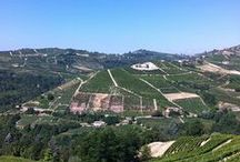 Langhe and Monferrato / Beautiful hills to discover
