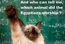Cats & other funny things