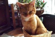 I love cats :) // kocham koty :)