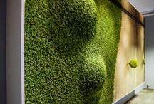 Exterior / Indoor garden