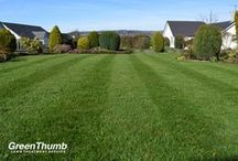 GreenThumb Lawns / Lush lawns treated by GreenThumb across the UK