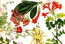 Botanica / All About Plants