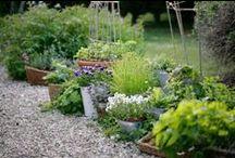 Bylinky/Herb Garden