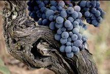 Il vino e l'uomo / Il vino è il canto della terra verso il cielo.