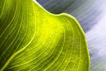 Chartreuse   Acid lime... / A particular tone of green I just love...