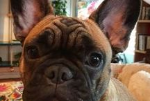Watson our Frenchy