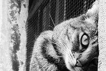 [cats] / animal, interior, modern, living, cat
