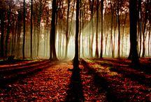 Les forêts de l'Oise / http://www.oisetourisme.com
