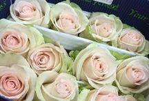 Nuestras flores! / Flores frescas, muy frescas