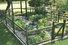 Garden diy / Garden crafts and diy ideas