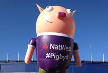 P i g b y ! / Our fabulous Pigby inflatable has been spotted throughout the T20 cricket season - have you spotted him too? #Pigby #Natwest #Cricket #T20