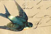 Bluebird / do you?