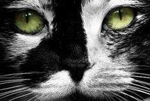kittyville