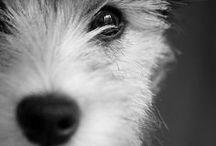 Lump ❤️ / Dog- Lump ❤️
