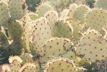 Prickly / cactus, succulent, garden, green