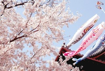 Sakura Senzen / The beautiful flower of the japanese spring. / by Irene C.