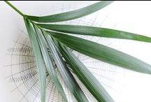 &PALMEN / Entdeckt die grüne Vielfalt der Palmen