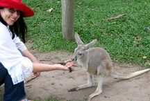 Australia, Mate! / Unbelievably beautiful Queensland, Australia / by The GypsyNesters
