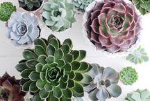 &SUKKULENTEN / Diese Trendpflanze ist einfach zu handhaben und daher die robuste Idealbesetzung für ein modernes Interieur-Design.