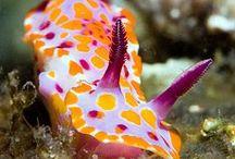 Nudibranchs / The world of nudibranchs -- ocean creatures.