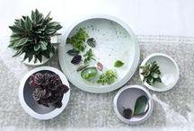 &ZWERGPFEFFER / Zwergpfeffer ist Zimmerpflanze des Monats April – Abwechslungsreiche Wohlfühlpflanze in handlichem Format.