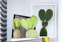 &KAKTEEN / Der Kaktus ist die Zimmerpflanze des Monats August. Er ist einfach zu pflegenden und verspricht ein stacheliges Vergnügen.