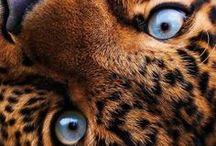 Animaux - Animals