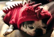 3D1C Pet Products