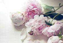 GARDEN/OGRÓD / Gardens, flowers, green/ Ogrody, kwiaty, zielone