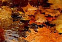 ~fall~
