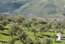 The Greek Olive Estate / All About Us