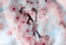 Flowers / Inspiring flowers