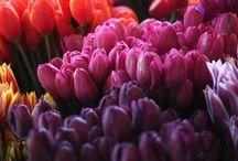 Flora / Flowers/bouquets/ exotic plants