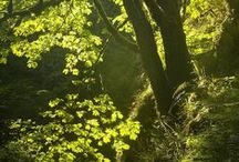Magic of the woods and forests / Magic of the woods and forests