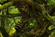 Trees knew our secrets /  If you would like to join to this board and share please send us an e mail and invite your friends Thank you  Trees knew our secrets